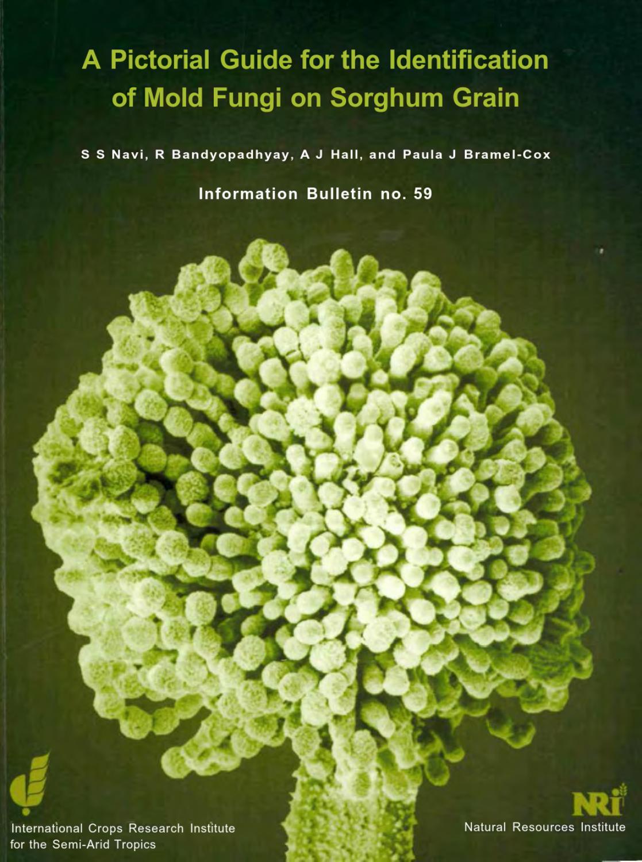helminthosporium sacchari cancer bucal durata