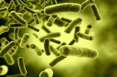 Bacterie patogenă - Wikipedia