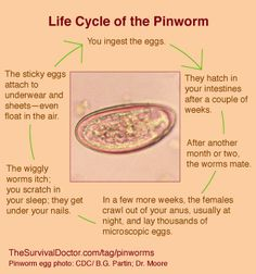 Enterobiasis or pinworm. Pastile de tratament cu vierme pinworm