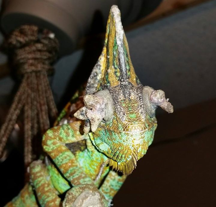 Weekly Shaptahik - A National Weekly of Bangladesh :: csrb.ro::, Papillomavirus in chameleons