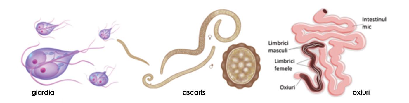 Parazitii intestinali la copii, dar si la adulti