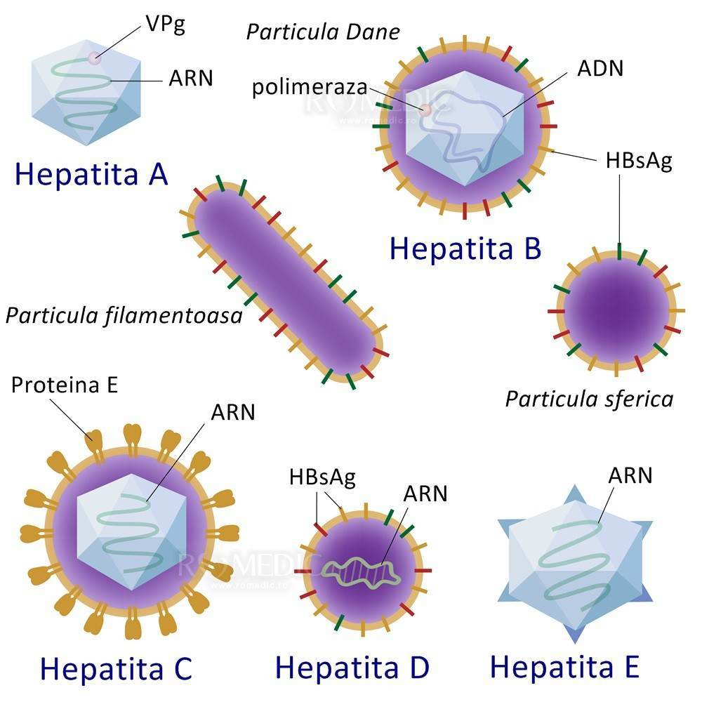 virusi hepatici b negi genitale, dure sau moi