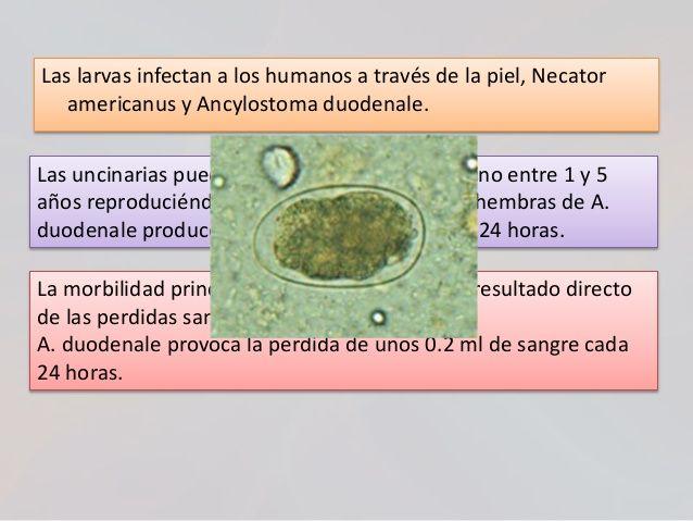 Enterobiasis que enfermedad es, Helminti Enterobius