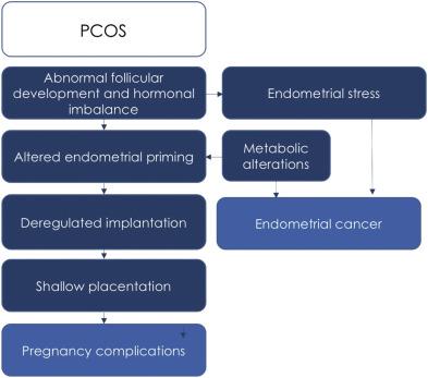 Endometrial cancer from pcos, Endometrial cancer pcos