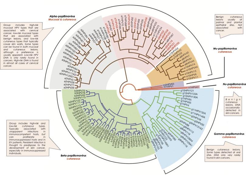 pastile pentru prevenirea viermilor și viermilor ce se întâmplă cu fergusul