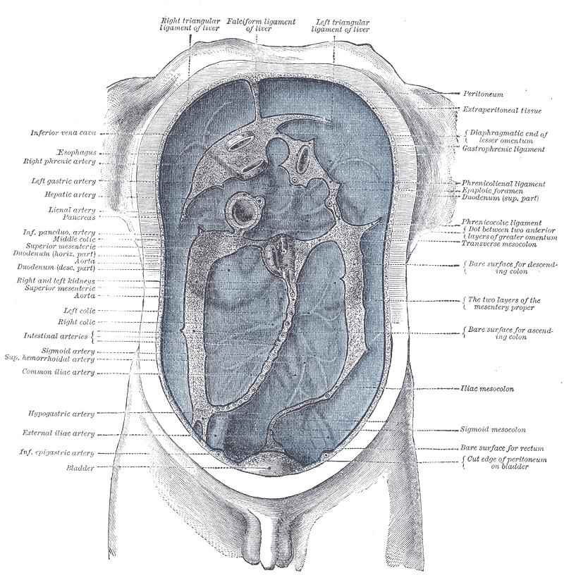 parazitoza cerebrala papilloma kenocs