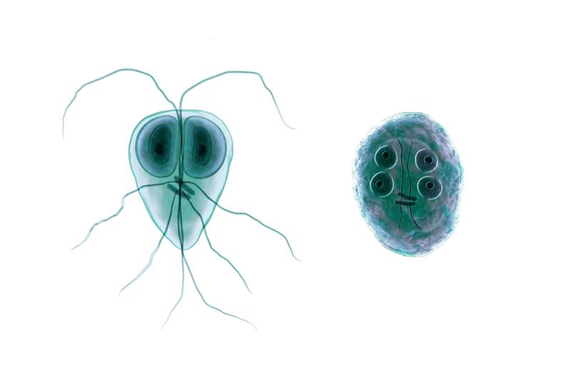 recomandări clinice pentru giardiază prevenirea copilului pinworm