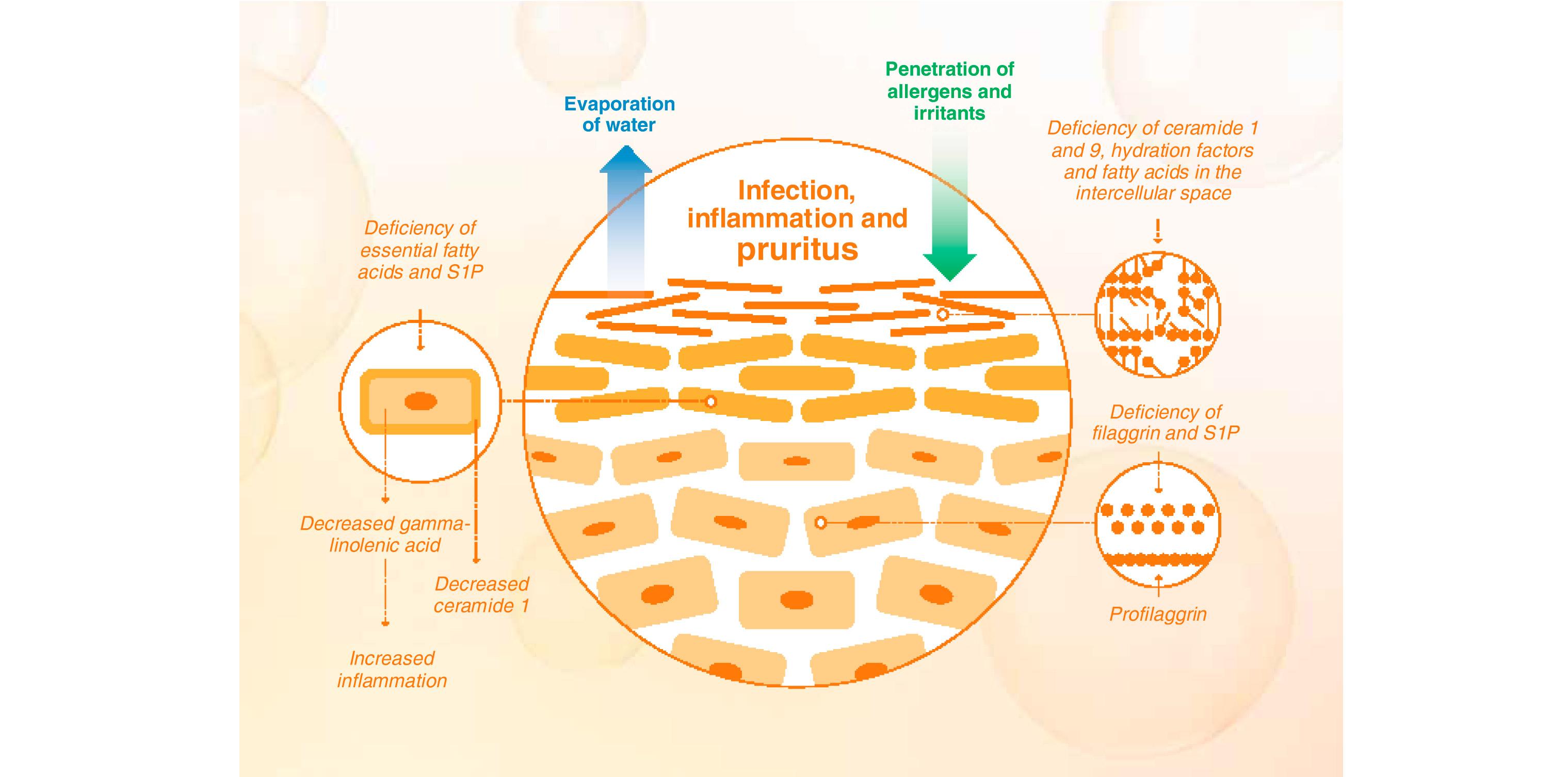 papillomavirus 45 prevenirea preparatelor viermilor umani