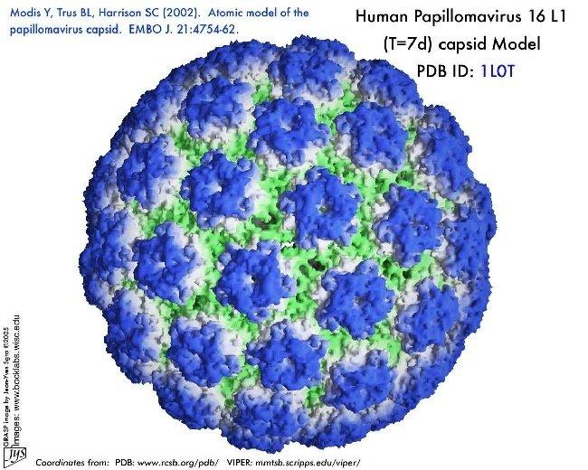 hpv virus type 16