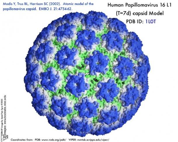 ADN Human Papilloma Virus (HPV) - detecție + genotipare