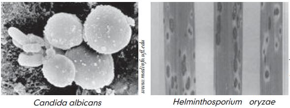 papilloma virus vaccino 12 anni