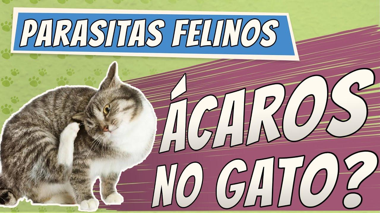 giardia gatos tratamento caseiro tratamentul negi genitale cu negi genitale