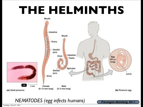 Define helminth adjective