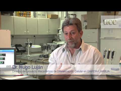 remedio giardia umane recenzii de eliminare a unguentelor papiloma
