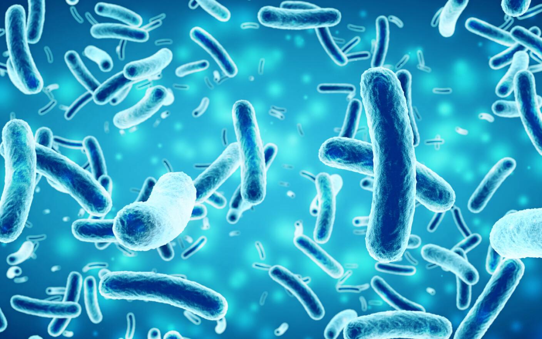 bacterii anaerobe sarcoma cancer quotes