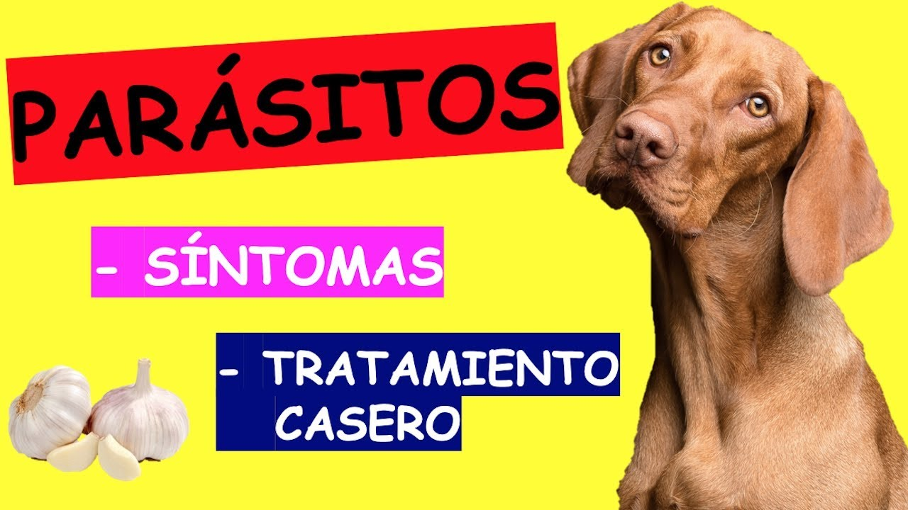 Tratamiento de oxiuros en perros