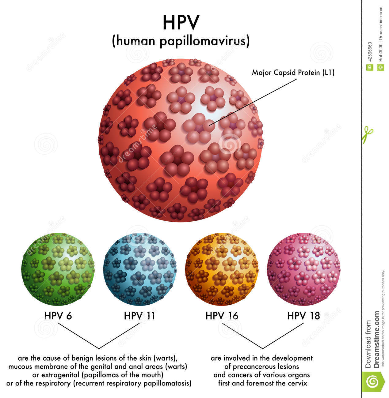 types of papillomavirus