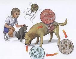 Viermișori la copil