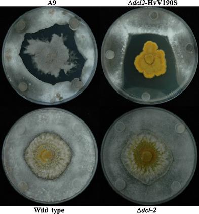 ceaiuri pt curatarea colonului papilloma virus vaccino 9 valente