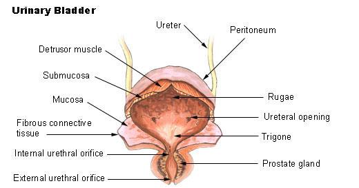 ce medicamente pentru negii genitali vestibular papillae symptoms