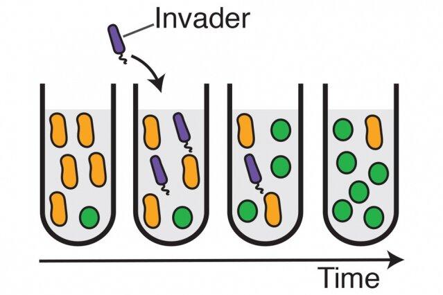 dysbiosis etymology condiloame pe glandele salivare