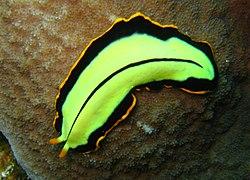 Platyhelminthes clase trematoda, REZULTATI ISKANJA: trematod