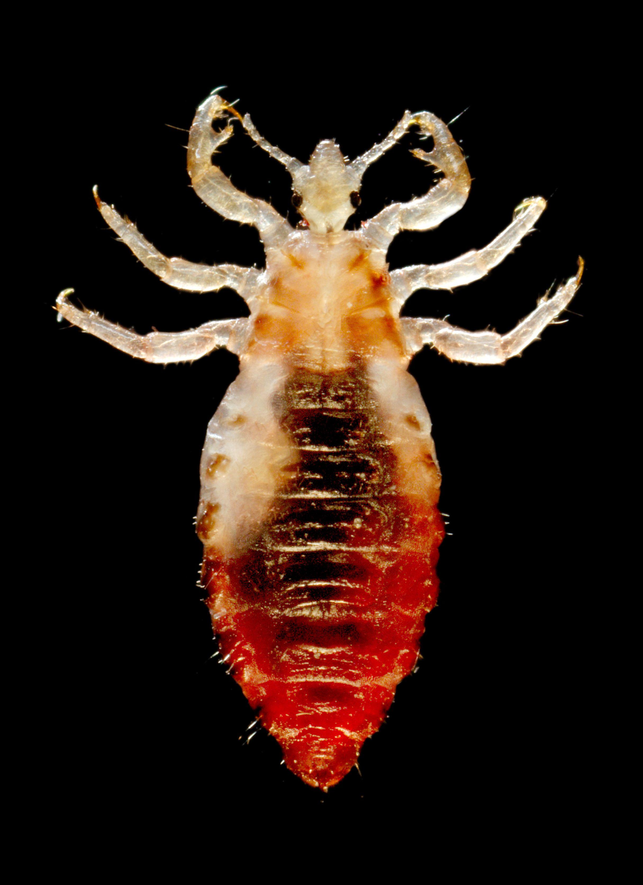 paraziti malofage manual de detoxifiere naturala