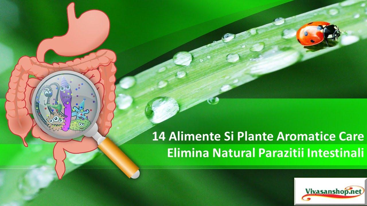 elimina paraziții din corpul pastilei