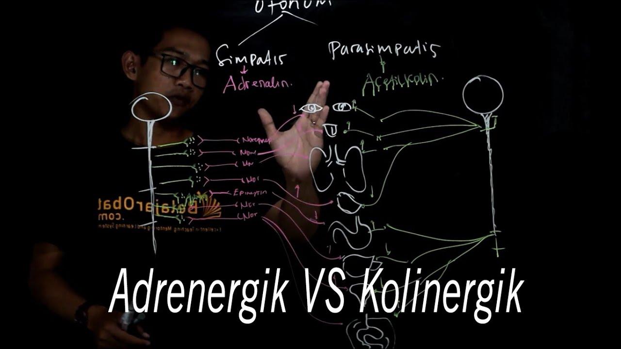 diete de detoxifiere a colonului zoologie de tenă