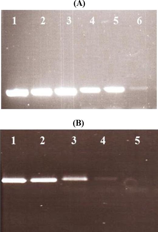 date epizootiologice privind fascioliaza tratamentul cauzei condiloamelor
