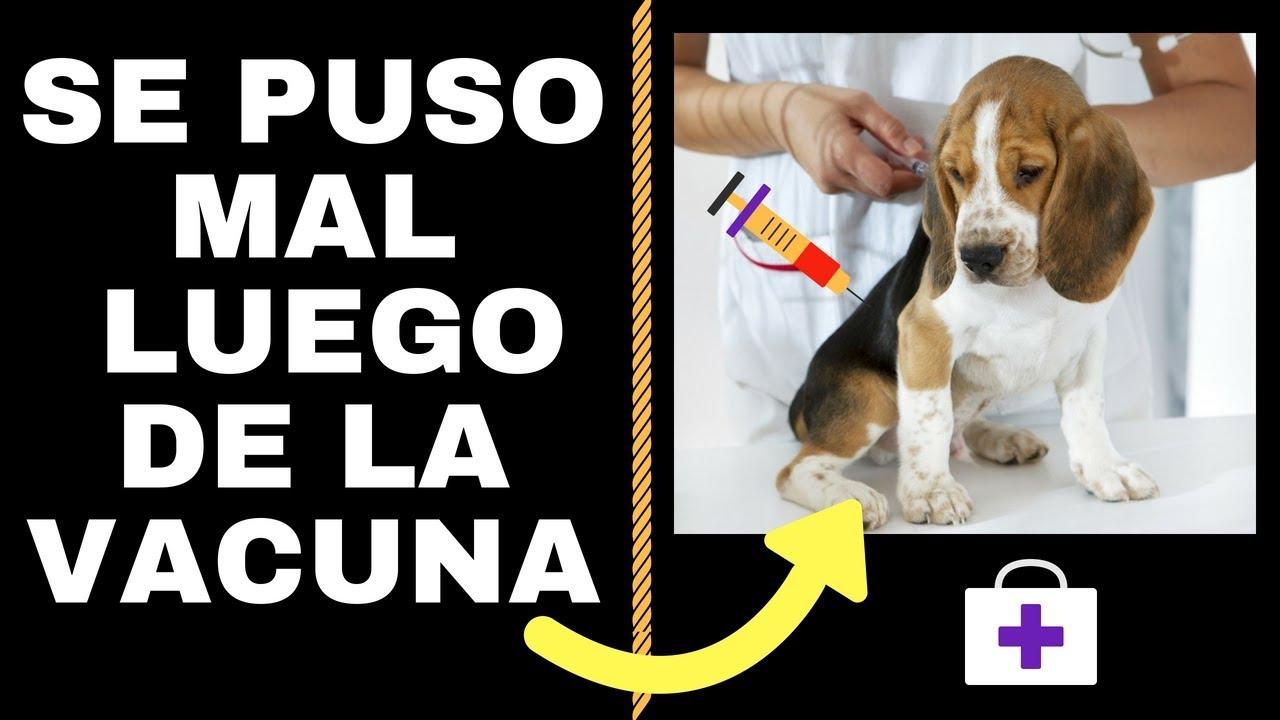 giardia vacuna pentru perros