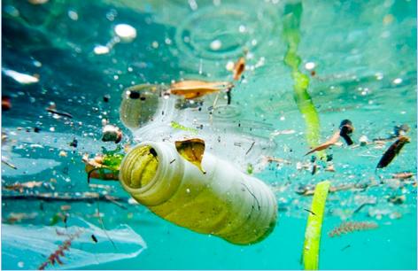Bacterie qui mange du plastique. Traducere