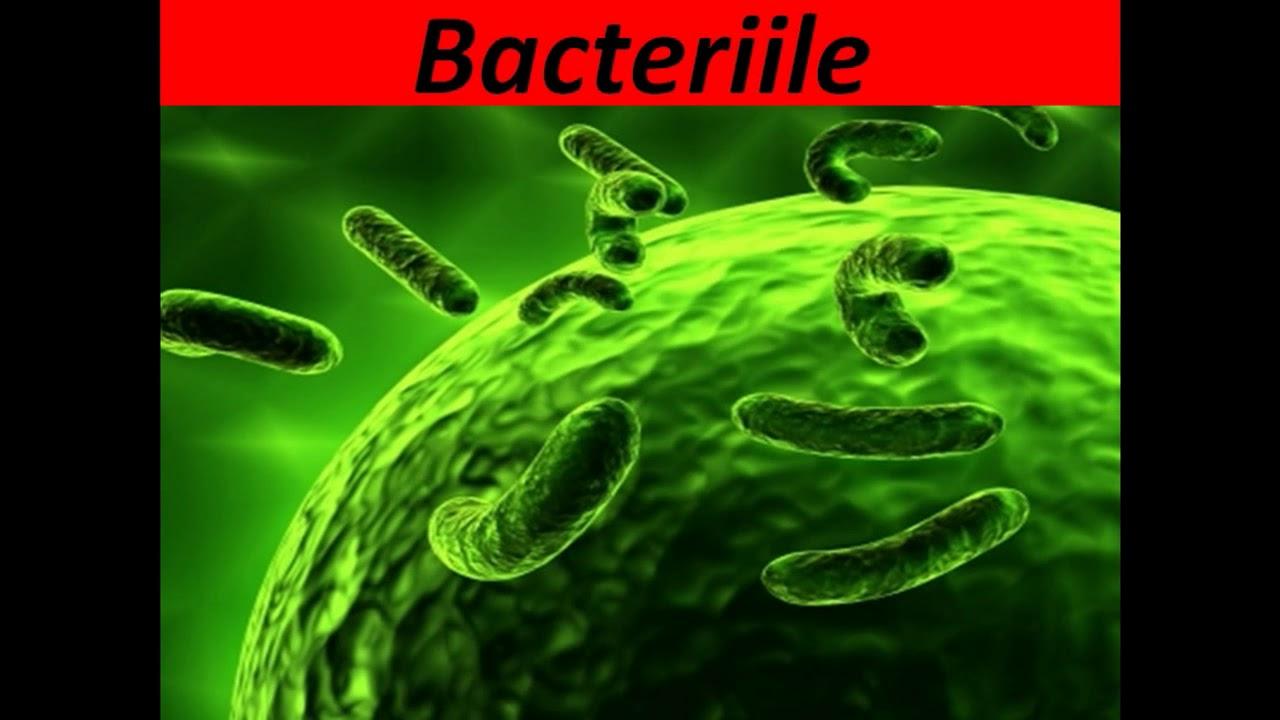 Spălând la 30 de grade, ucidem doar 6% din bacterii