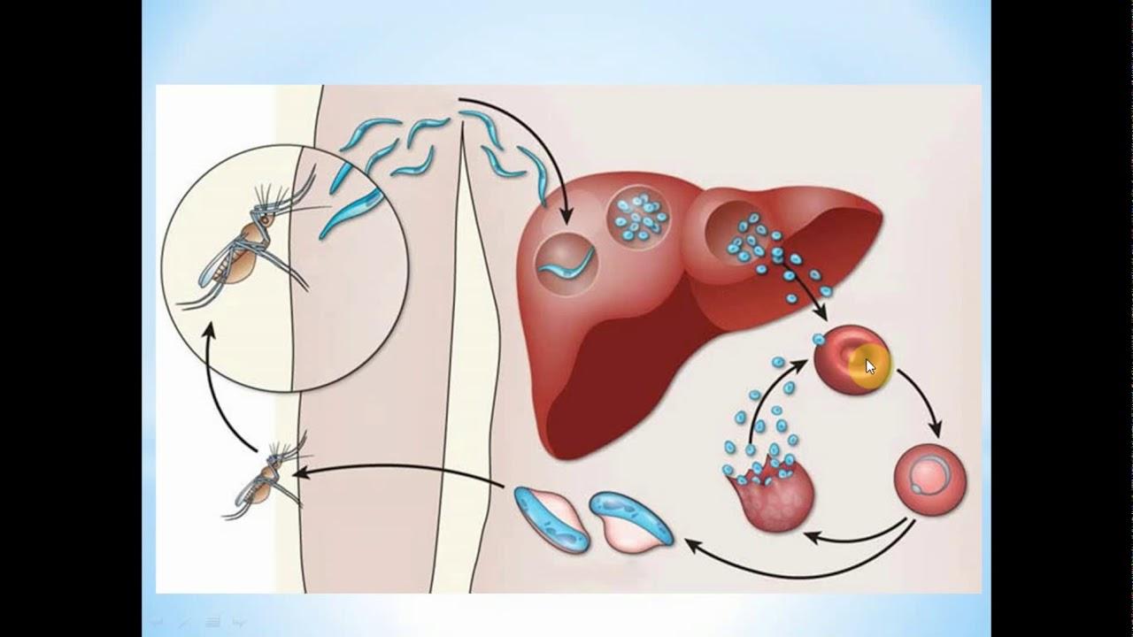 paraziti in organism papilloma virus zone