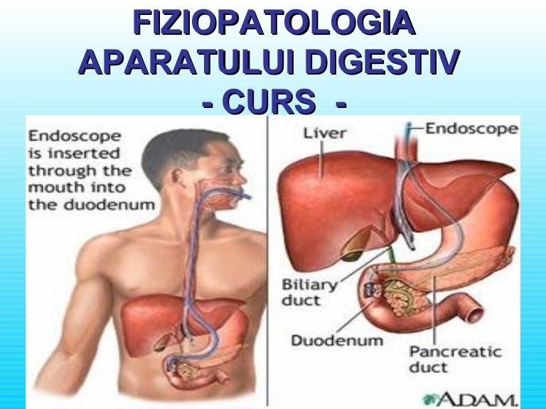 Duodenul | Anatomie si fiziologie