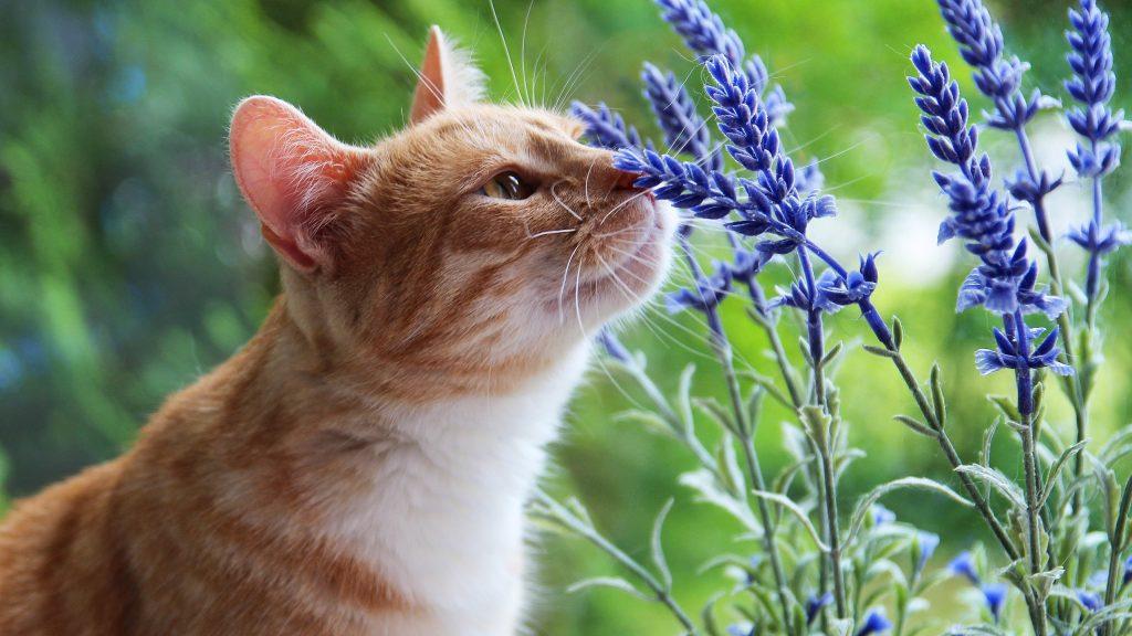 Veterinara - blog | Din dragoste pentru animale - Part 4