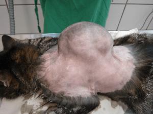 cancer vaccine sarcoma hpv infektio oireet