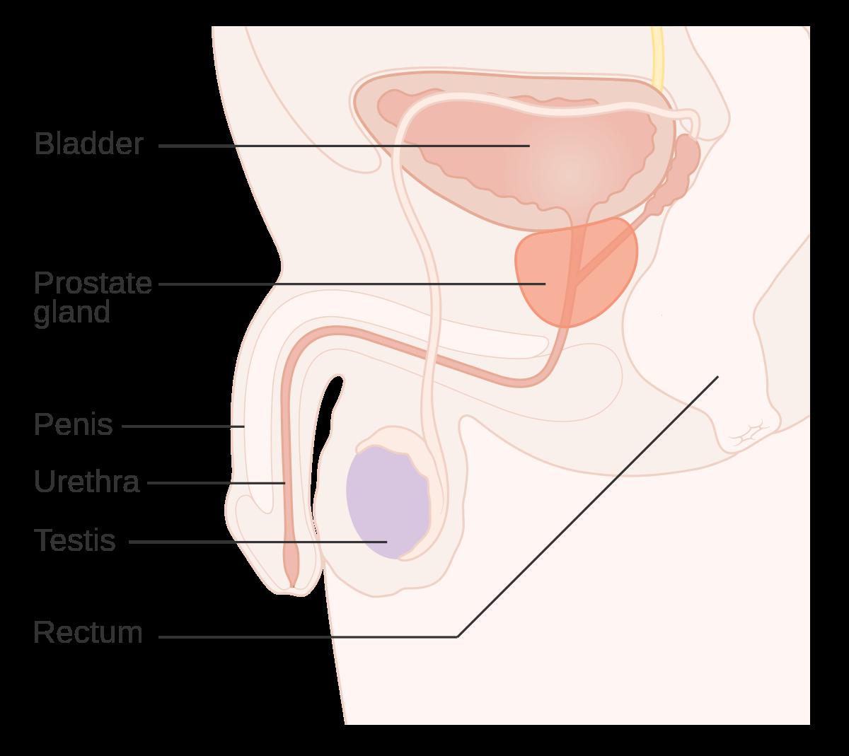 cum este ortografia enterobiozei? papilloma meaning in telugu