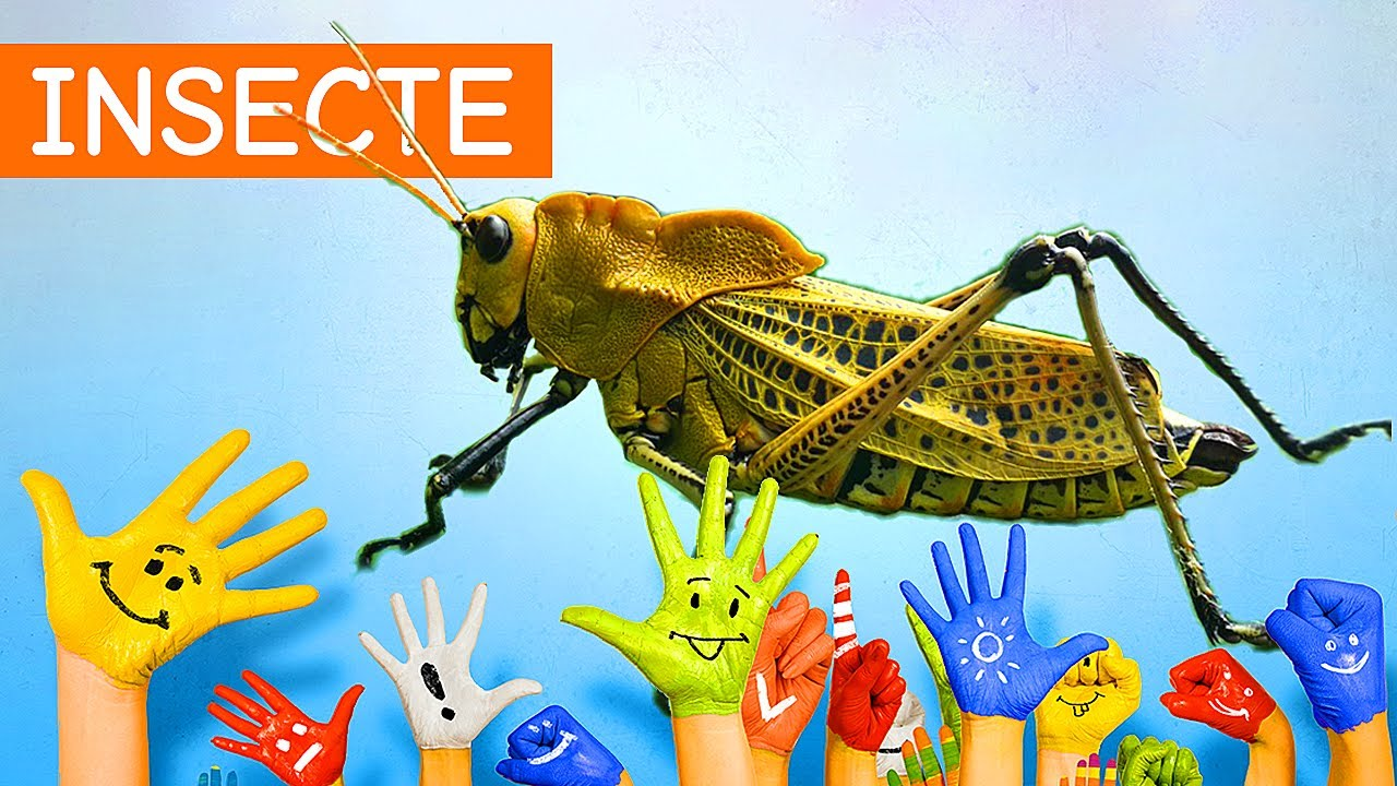 Protecție insecte (58 produse) - csrb.ro