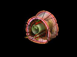 Phylum platyhelminthes tip coelom, Phylum Bryozoa