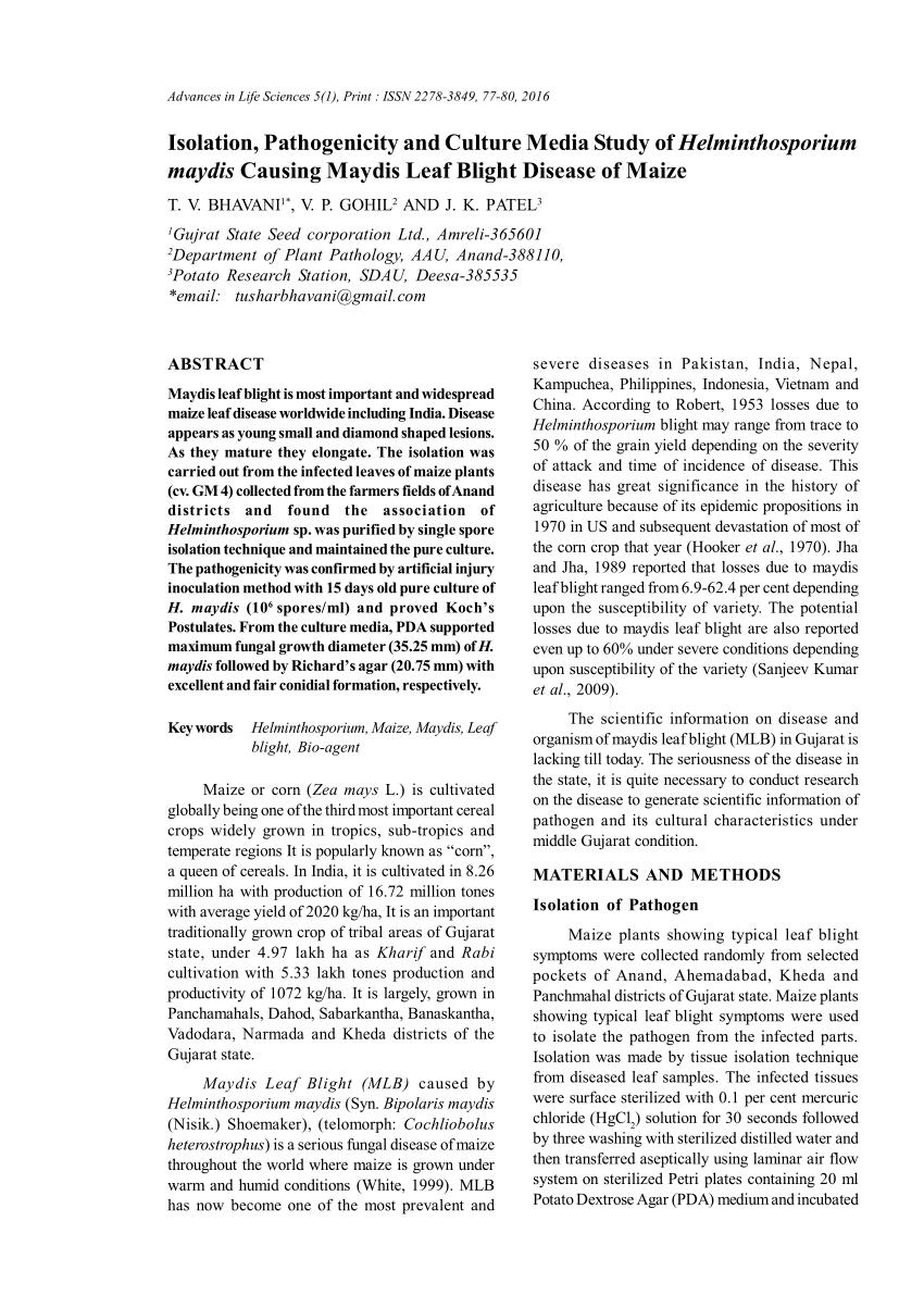 Control Fitosanitae Proiect Control de helminthosporium maydis