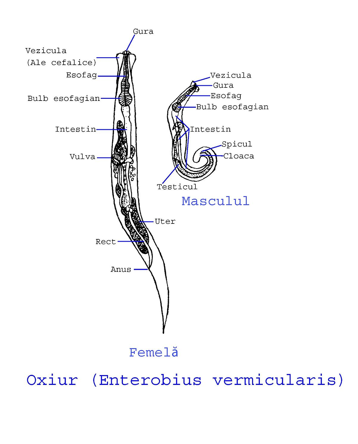 oxiurus como tratamento