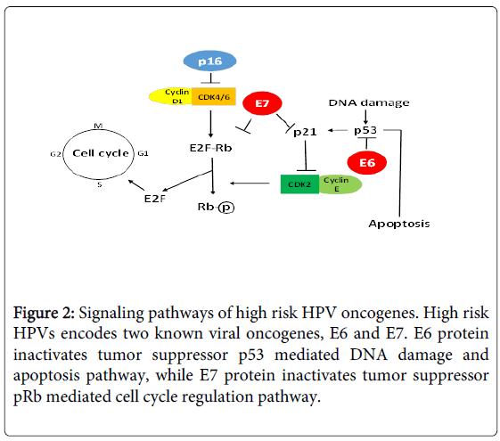 hpv cancer p16 cabinet de enterobioză