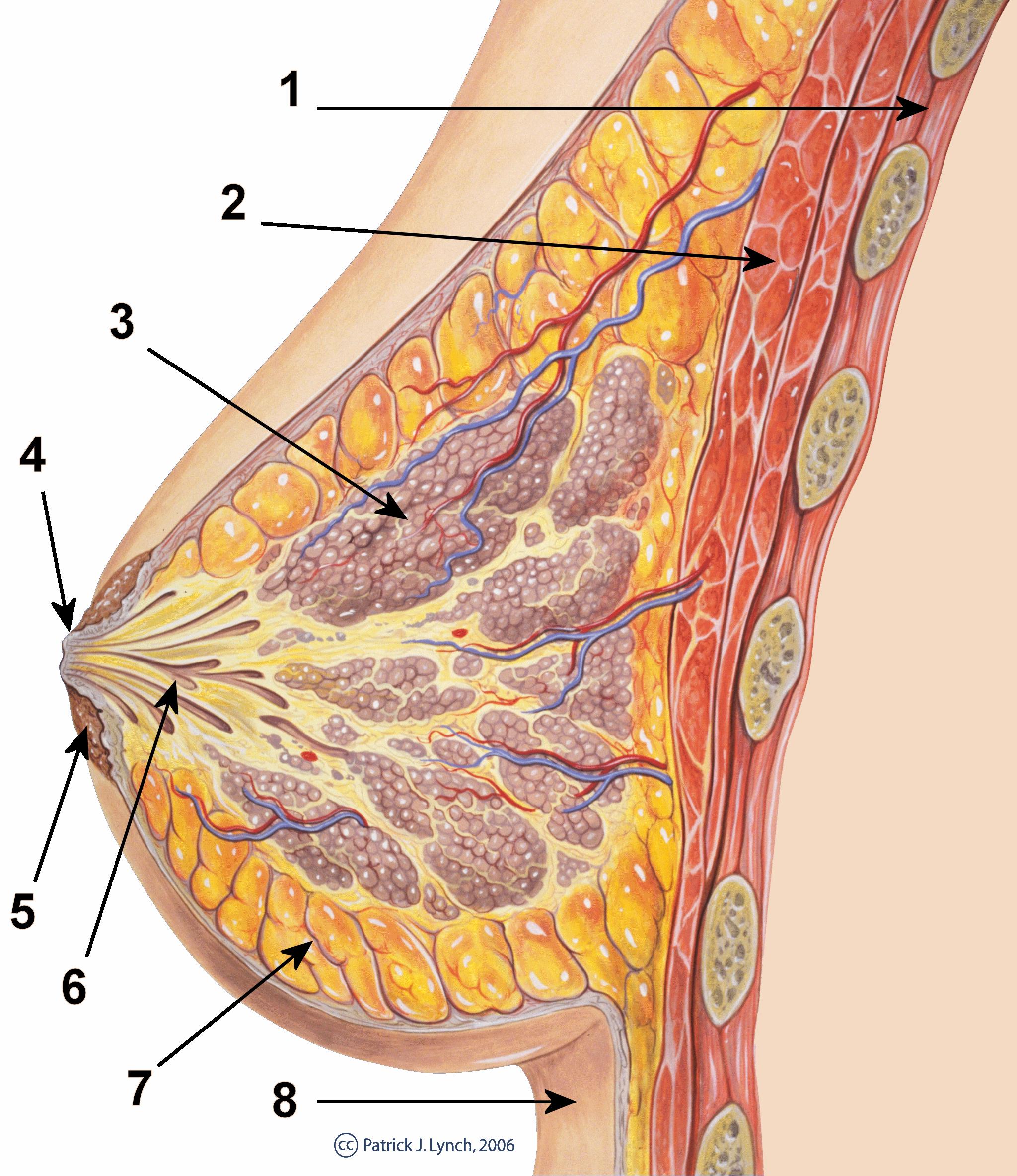 papilloma ai dotti del seno