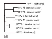 Papillomavirus types warts.