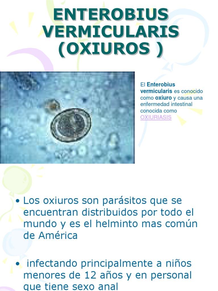 Oxiuros donde se encuentran, OXIURO - Definiția și sinonimele oxiuro în dicționarul Spaniolă