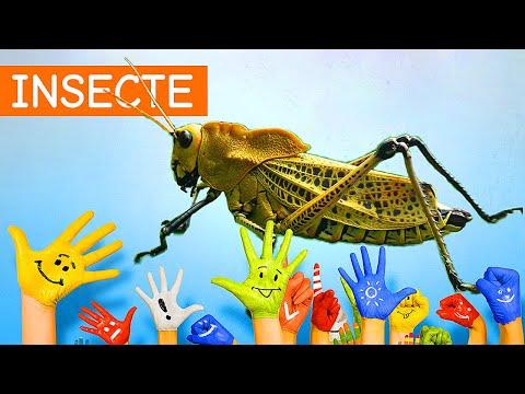 speciile de vierme parazitizează acest lucru