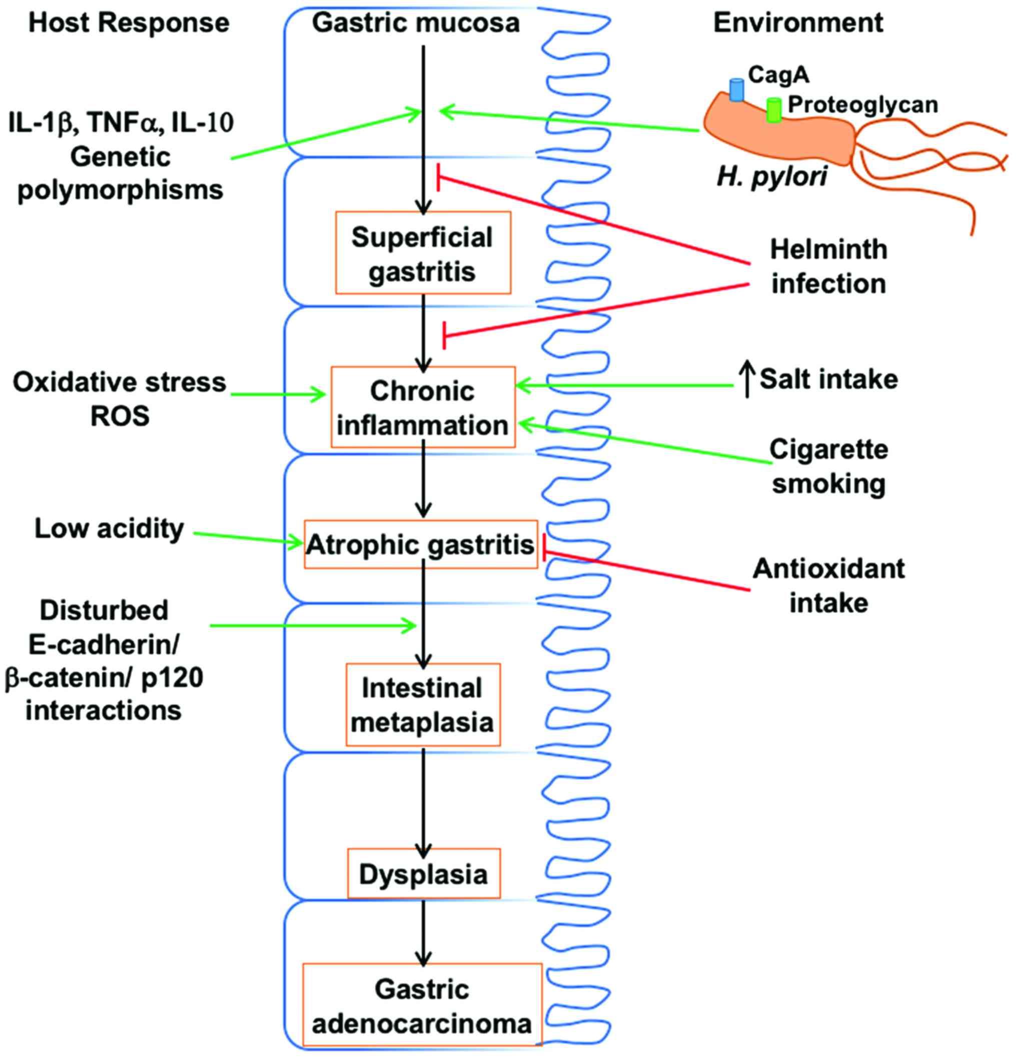 biohelminth pinworm sau geohelminth