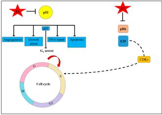 un papillomavirus en arabe