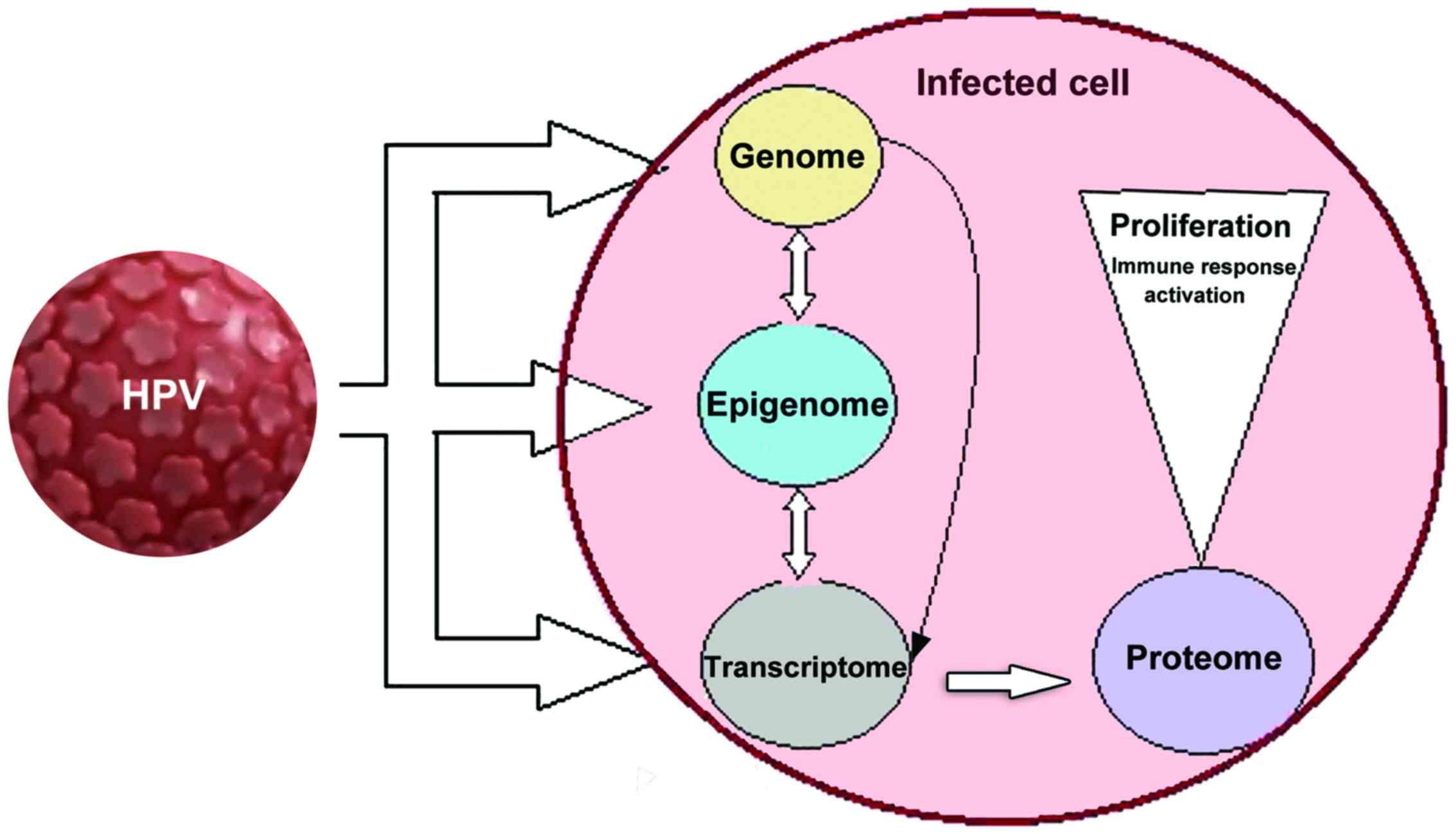 virusuri papiloma umane cu risc oncogen